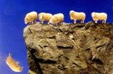 NL_Herd