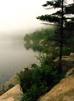 The Maine Coast - Acadia National Forest