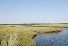 Scarborough Great Salt Marsh